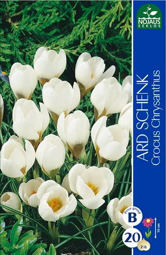 Tulpės, narcizai, lelijos, hiacintai pirkti internetu