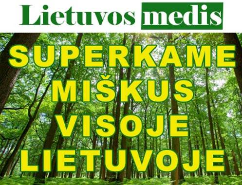 """Lietuvos medis"" brangiai perka miska visoje Lietuvoje"