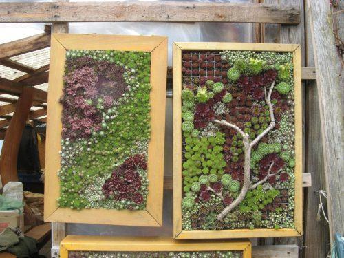 Lauko paveikslai iš žaliuojančių augalų