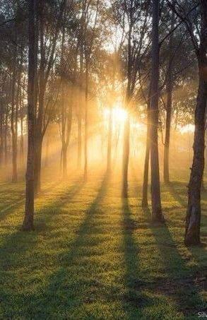 Brangiai Perkame Mišką, (us) Visoje Lietuvoje